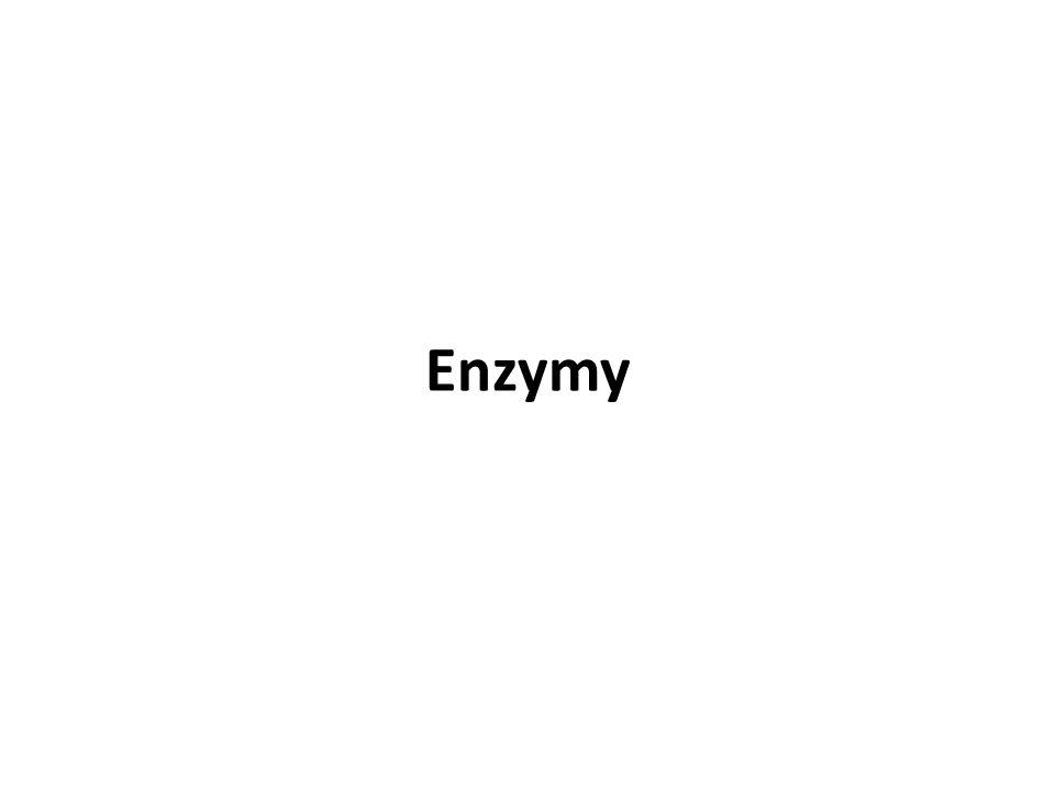 Patří mezi biokatalyzátory Jsou nepostradatelné při metabolických procesech Základní složkou enzymů jsou bílkoviny, na něž se velmi často vážou další přídatné molekuly