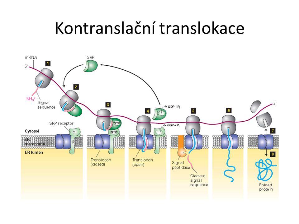 Kontranslační translokace
