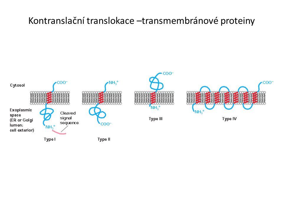 Kontranslační translokace –transmembránové proteiny