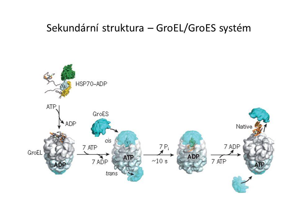 Sekundární struktura – GroEL/GroES systém
