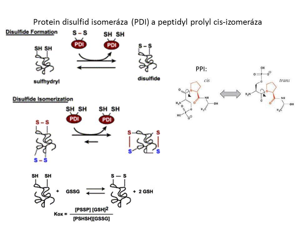 Protein disulfid isomeráza (PDI) a peptidyl prolyl cis-izomeráza PPI: