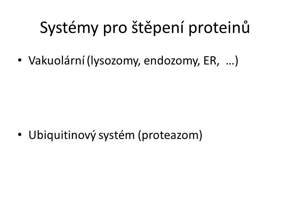 Systémy pro štěpení proteinů Vakuolární (lysozomy, endozomy, ER, …) Ubiquitinový systém (proteazom)