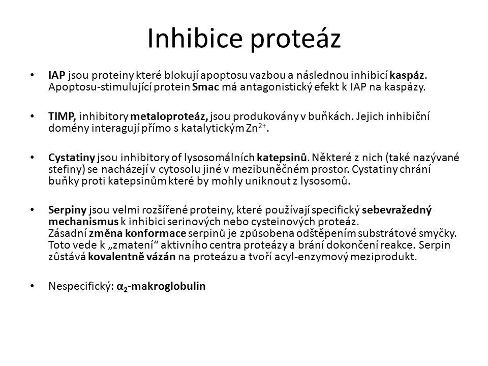 Inhibice proteáz IAP jsou proteiny které blokují apoptosu vazbou a následnou inhibicí kaspáz.