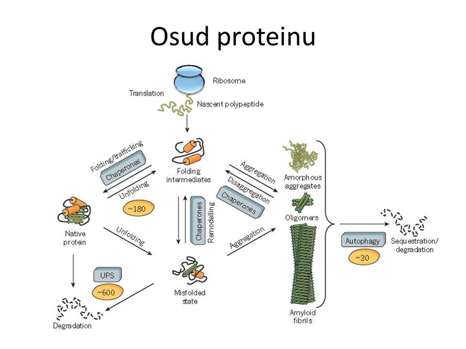 Osud proteinu