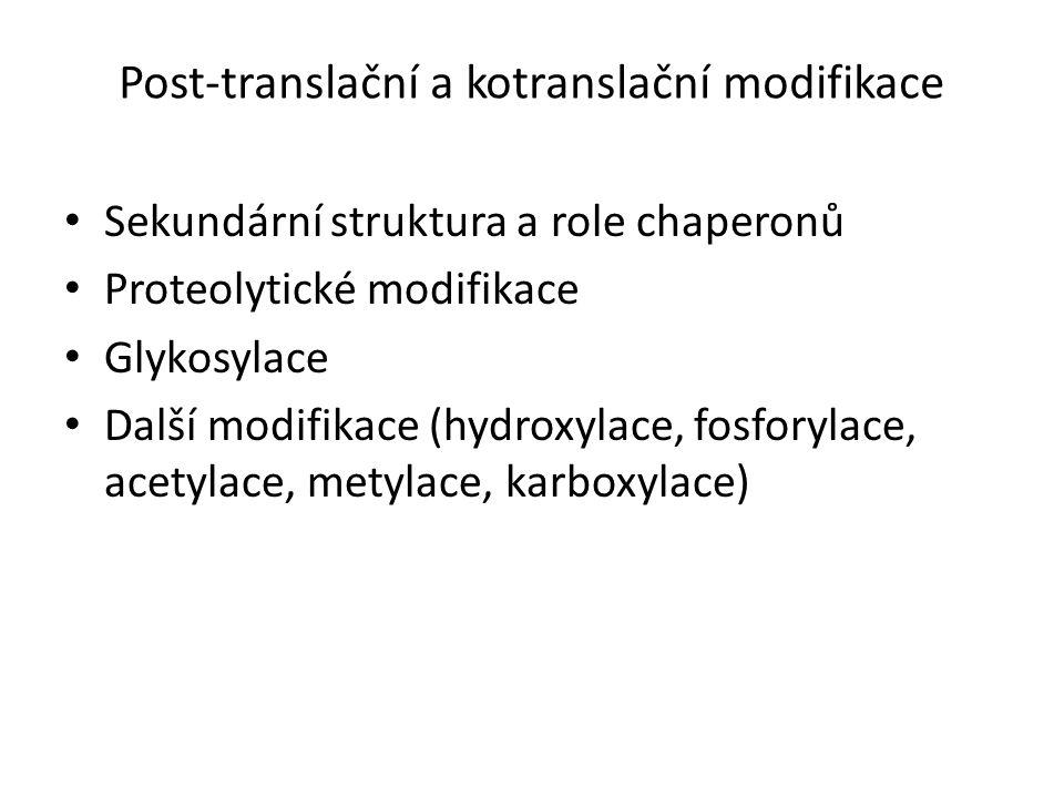 Post-translační a kotranslační modifikace Sekundární struktura a role chaperonů Proteolytické modifikace Glykosylace Další modifikace (hydroxylace, fosforylace, acetylace, metylace, karboxylace)