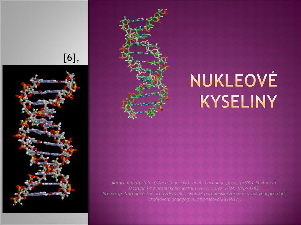  DNA se po transkripci opět spojí a mRNA přechází z jádra do cytoplazmy buňky, kde se váže s několika ribosomy (rRNA) a překládá jim to, co přepsala z DNA.