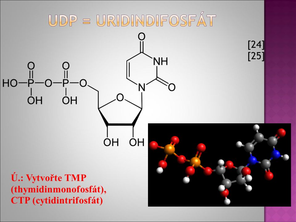 [24] [25] Ú.: Vytvořte TMP (thymidinmonofosfát), CTP (cytidintrifosfát)