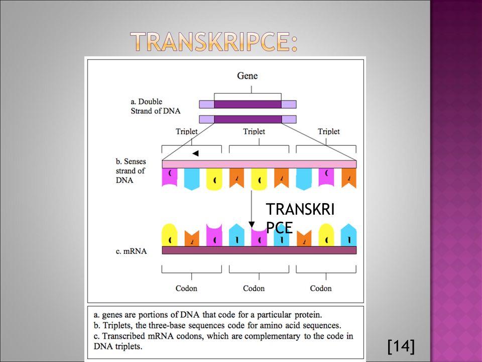 [14] TRANSKRI PCE