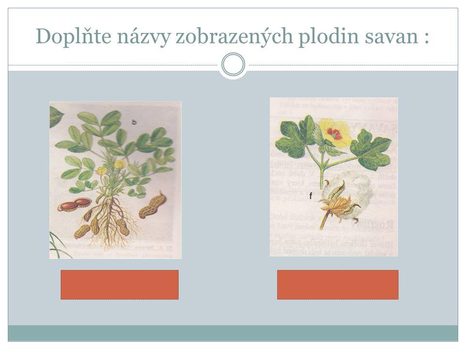 Doplňte názvy zobrazených plodin savan :