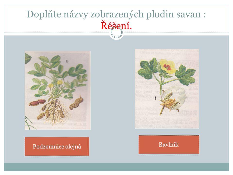 Doplňte názvy zobrazených plodin savan : Řěšení. Podzemnice olejná Bavlník