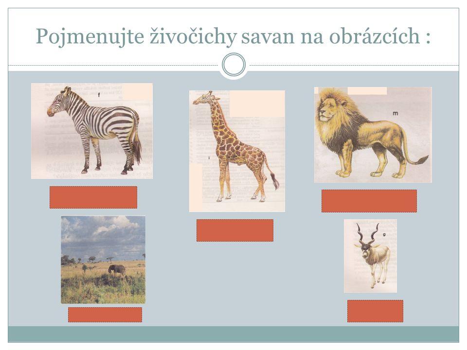 Pojmenujte živočichy savan na obrázcích :