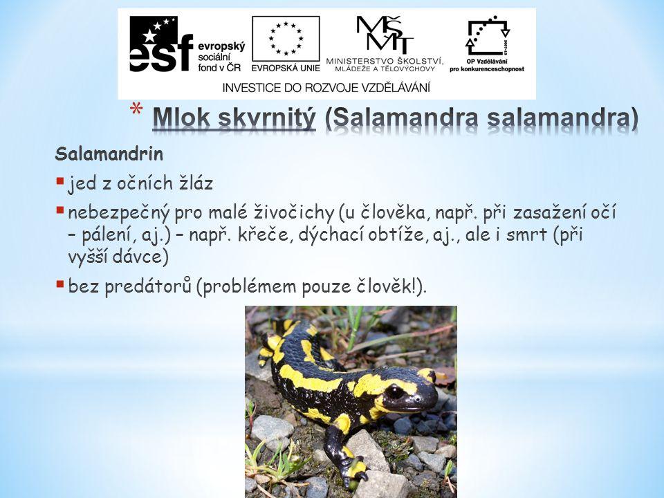 Salamandrin  jed z očních žláz  nebezpečný pro malé živočichy (u člověka, např.