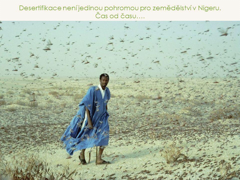 Desertifikace není jedinou pohromou pro zemědělství v Nigeru. Čas od času….