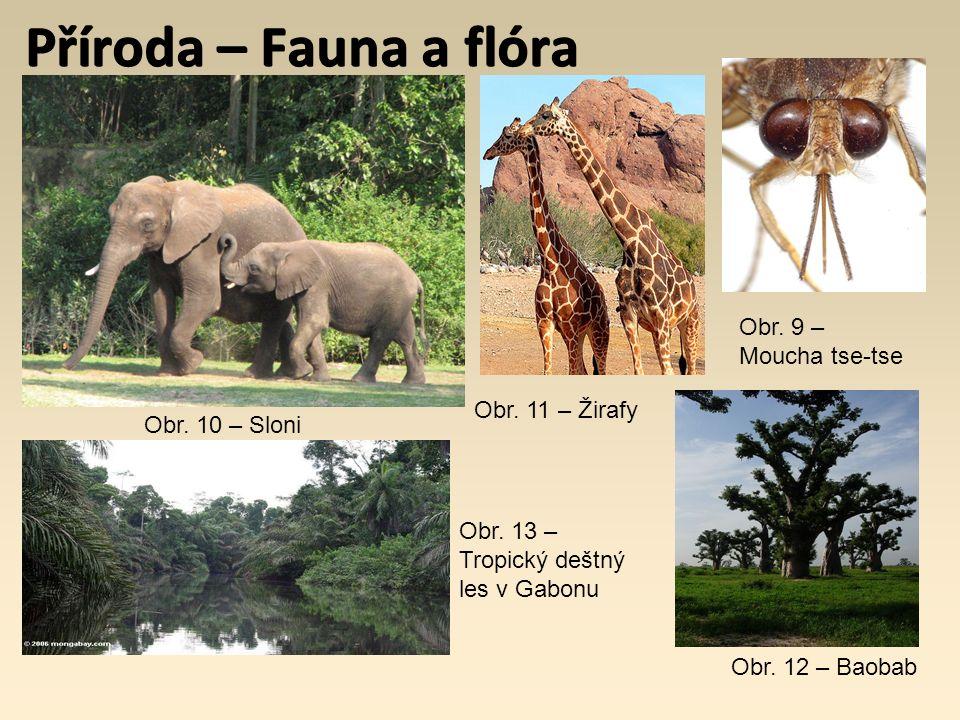 Příroda – Fauna a flóra Obr. 9 – Moucha tse-tse Obr. 10 – Sloni Obr. 11 – Žirafy Obr. 12 – Baobab Obr. 13 – Tropický deštný les v Gabonu
