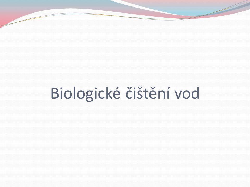 Biologické čištění vod