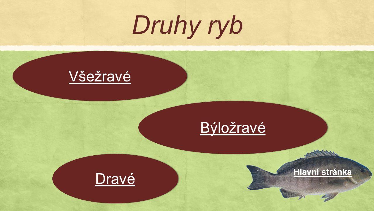 Druhy ryb Hlavní stránka Dravé Všežravé Býložravé