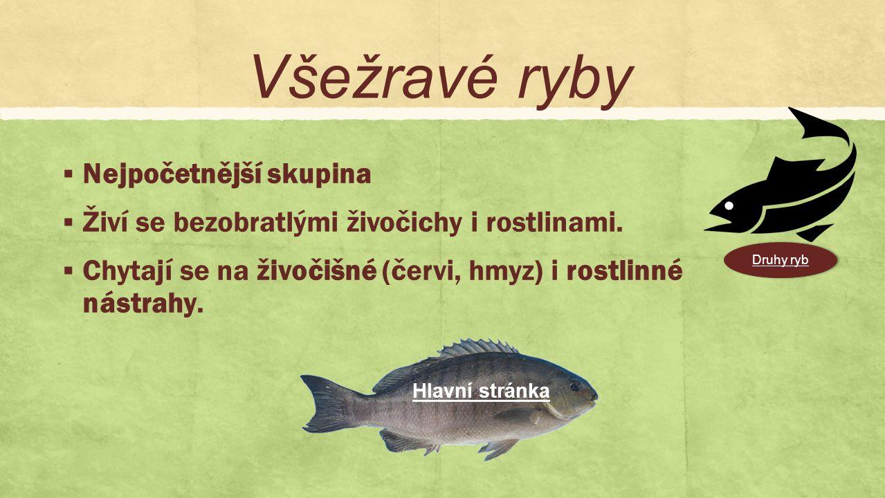 Býložravé  Poměrně málo druhů.  Chytají se hlavně na vodní rostliny. Druhy ryb Hlavní stránka