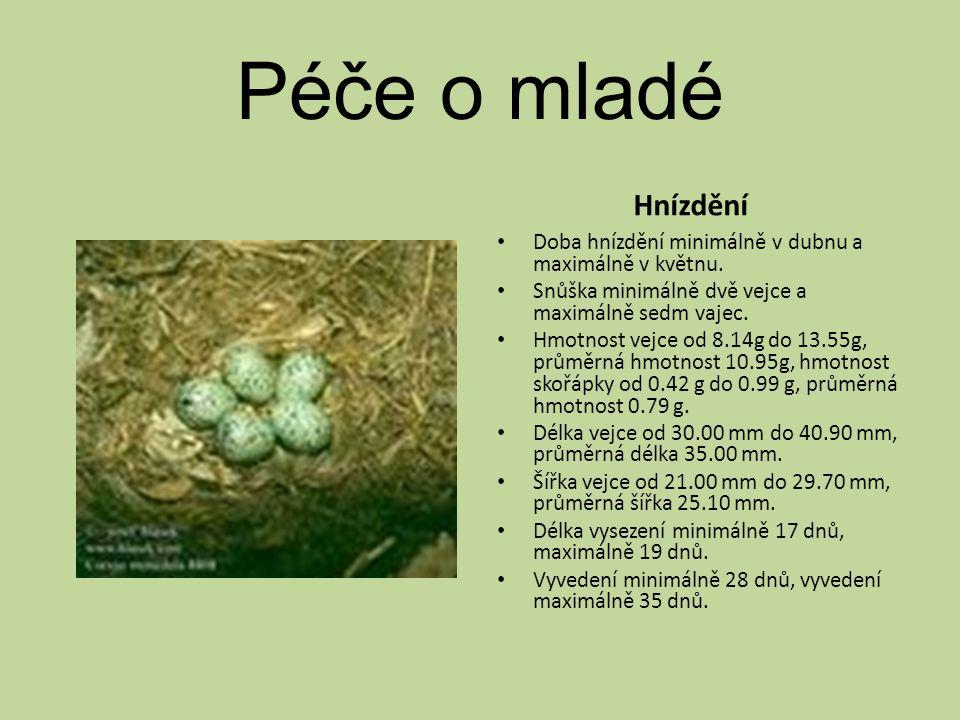 Péče o mladé Hnízdění Doba hnízdění minimálně v dubnu a maximálně v květnu.