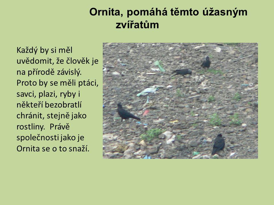 Ornita, pomáhá těmto úžasným zvířatům Každý by si měl uvědomit, že člověk je na přírodě závislý.