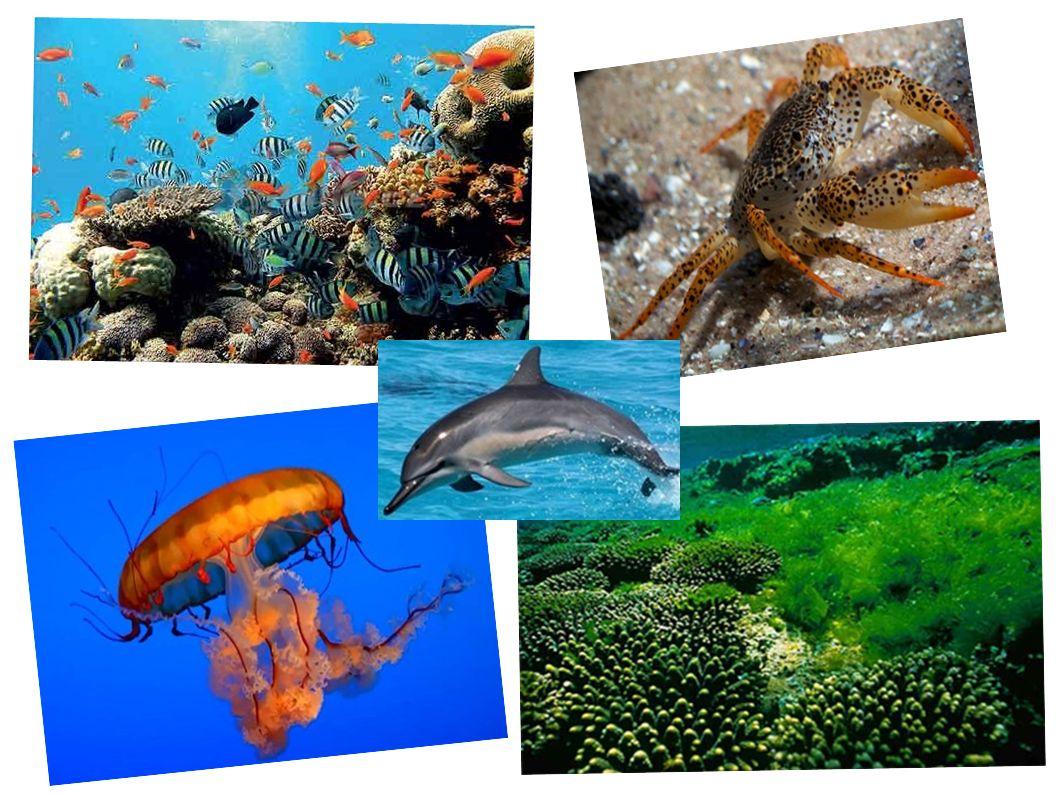 Využití moří lidmi ● Rybolov ● Těžba (ropa, plyn...) ● Odlučování soli ● Lodní doprava ● Rekreace a sport