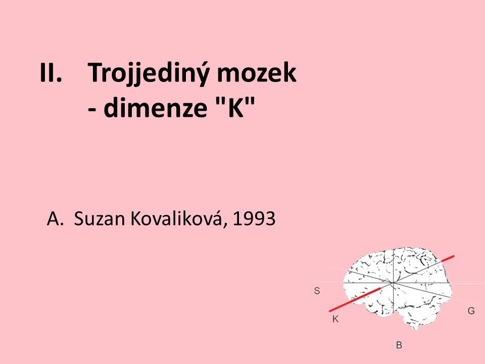 II.Trojjediný mozek - dimenze