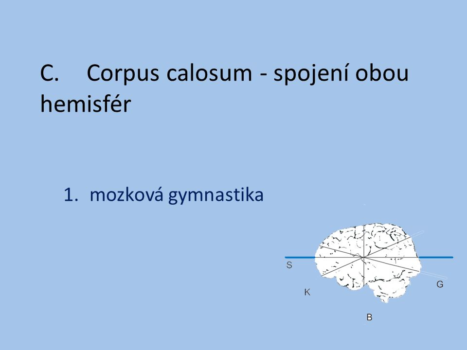 C.Corpus calosum - spojení obou hemisfér 1.mozková gymnastika
