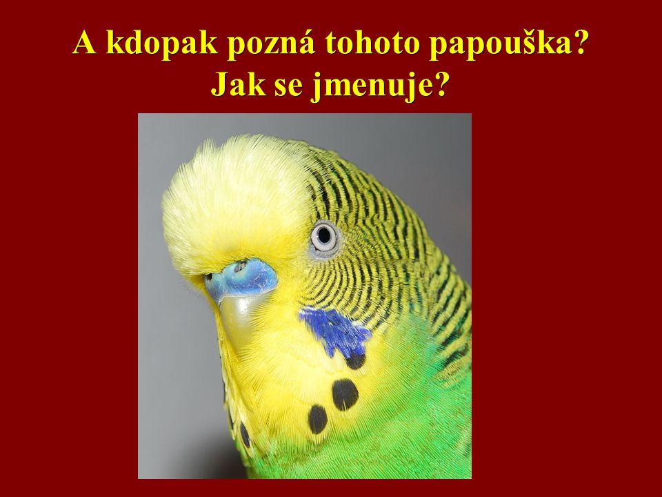A kdopak pozná tohoto papouška? Jak se jmenuje?
