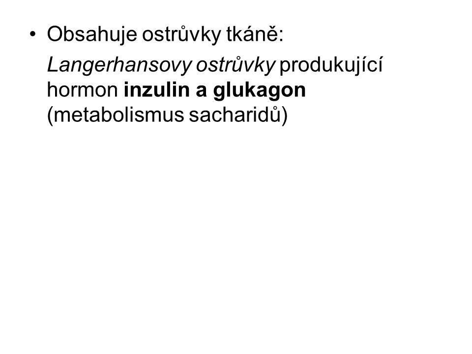 Obsahuje ostrůvky tkáně: Langerhansovy ostrůvky produkující hormon inzulin a glukagon (metabolismus sacharidů)