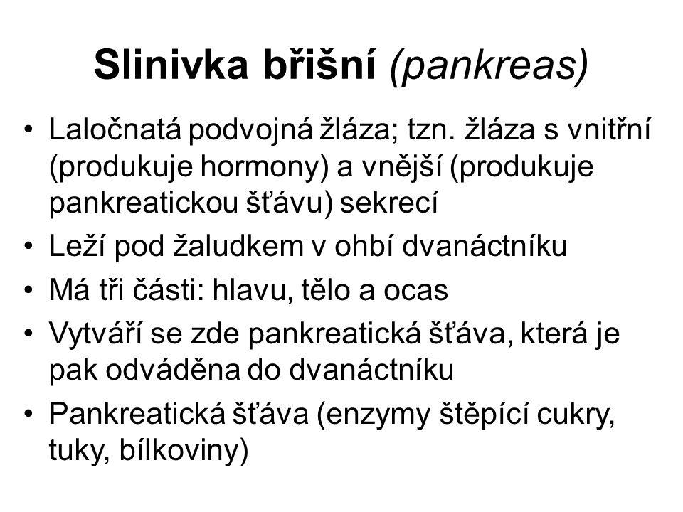 Slinivka břišní (pankreas) Laločnatá podvojná žláza; tzn.