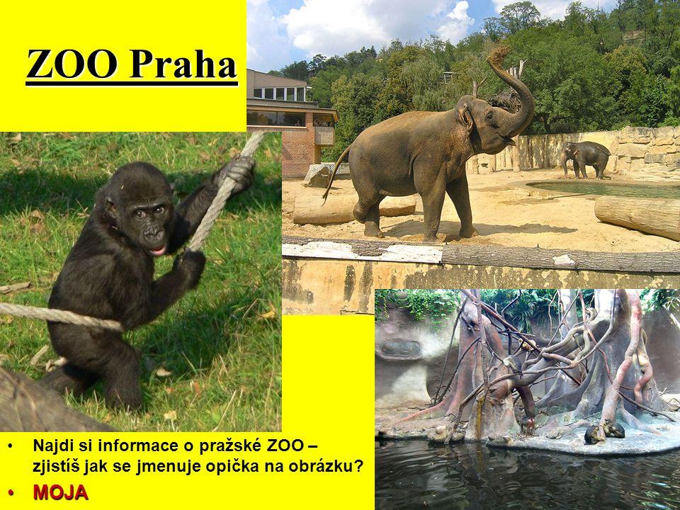ZOO Praha Najdi si informace o pražské ZOO – zjistíš jak se jmenuje opička na obrázku? MOJA