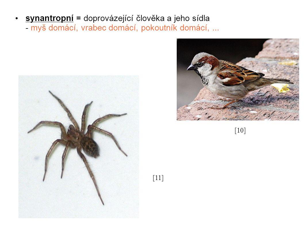 synantropní = doprovázející člověka a jeho sídla - myš domácí, vrabec domácí, pokoutník domácí,...