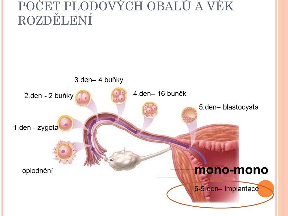 POČET PLODOVÝCH OBALŮ A VĚK ROZDĚLENÍ oplodnění 1.den - zygota 2.den - 2 buňky 3.den– 4 buňky 4.den– 16 buněk 5.den– blastocysta 6-9.den– implantace mono-mono