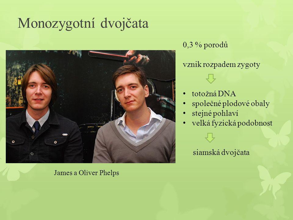 Monozygotní dvojčata 0,3 % porodů vznik rozpadem zygoty totožná DNA společné plodové obaly stejné pohlaví velká fyzická podobnost siamská dvojčata Jam