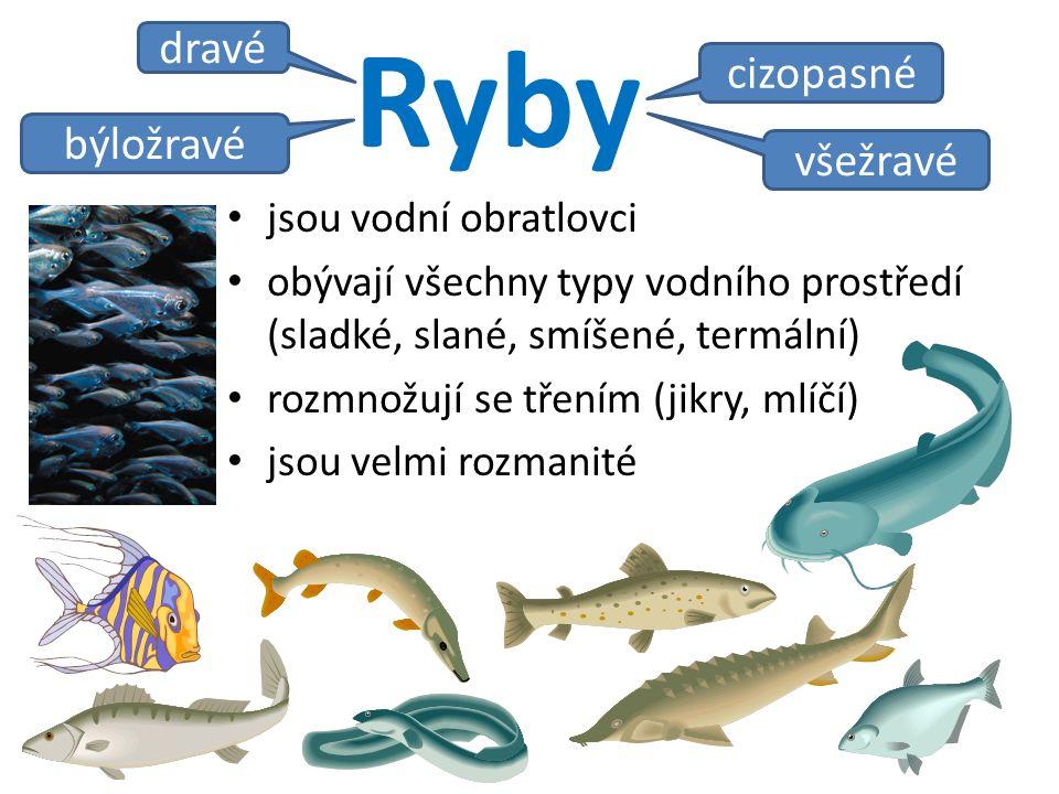 Ryby jsou vodní obratlovci obývají všechny typy vodního prostředí (sladké, slané, smíšené, termální) rozmnožují se třením (jikry, mlíčí) jsou velmi rozmanité býložravé dravé všežravé cizopasné