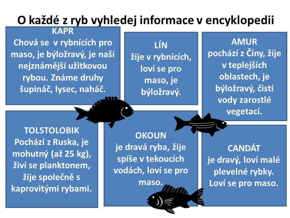 O každé z ryb vyhledej informace v encyklopedii KAPR Chová se v rybnících pro maso, je býložravý, je naší nejznámější užitkovou rybou.