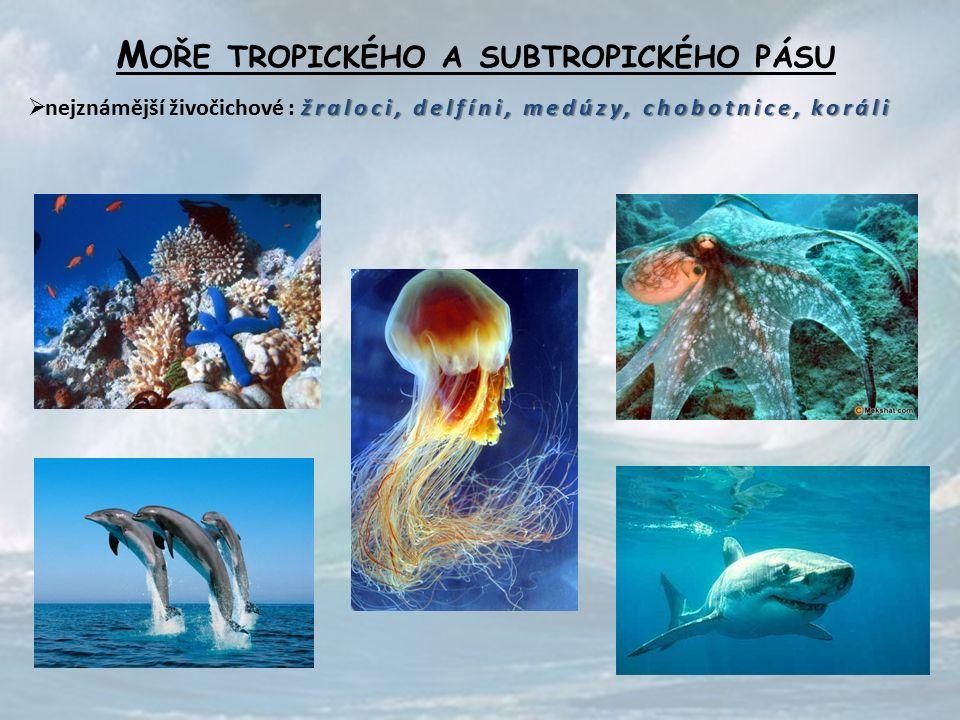 M OŘE TROPICKÉHO A SUBTROPICKÉHO PÁSU žraloci, delfíni, medúzy, chobotnice, koráli  nejznámější živočichové : žraloci, delfíni, medúzy, chobotnice, koráli