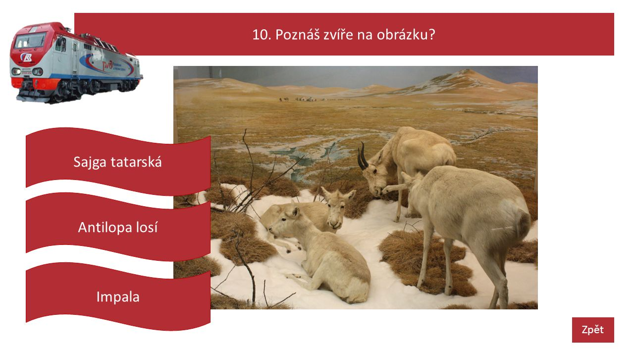 10. Poznáš zvíře na obrázku Zpět Antilopa losí Sajga tatarská Impala