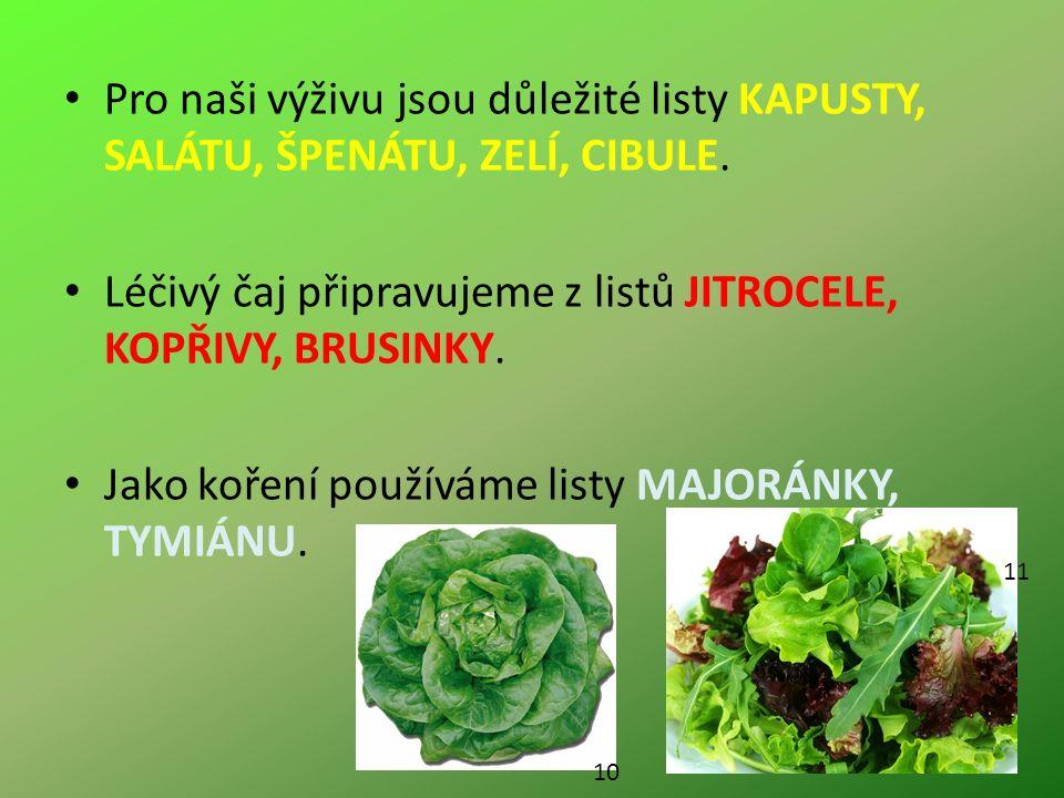Pro naši výživu jsou důležité listy KAPUSTY, SALÁTU, ŠPENÁTU, ZELÍ, CIBULE.