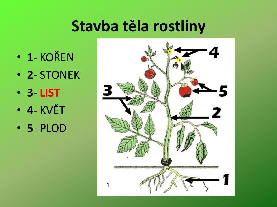 Stavba těla rostliny 1- KOŘEN 2- STONEK 3- LIST 4- KVĚT 5- PLOD 1