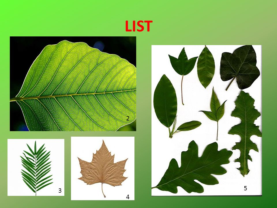 Na podzim. Ve kterém ročním období listy opadávají?