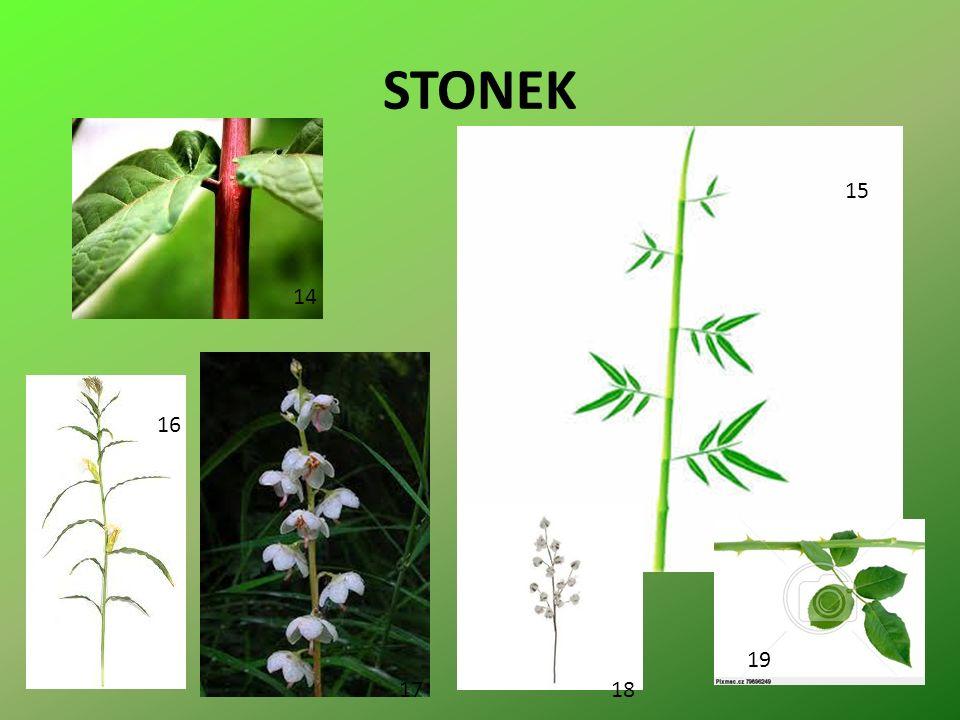 STONEK 14 15 16 1718 19