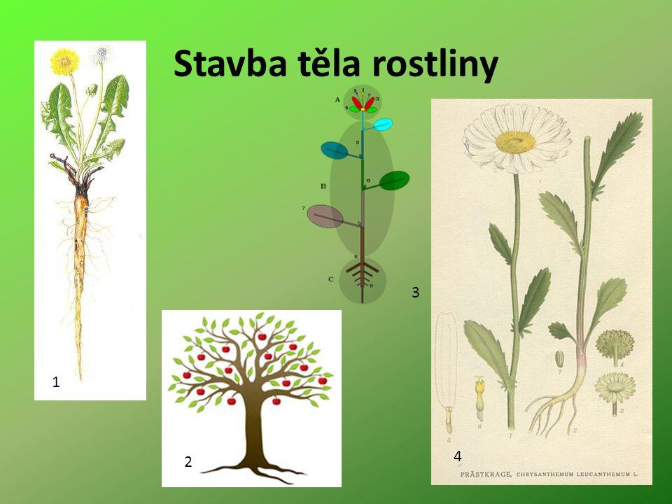 Stavba těla rostliny 1 2 3 4