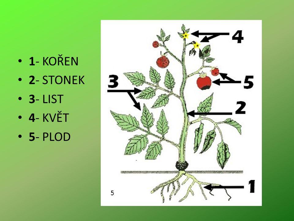1- KOŘEN 2- STONEK 3- LIST 4- KVĚT 5- PLOD 5
