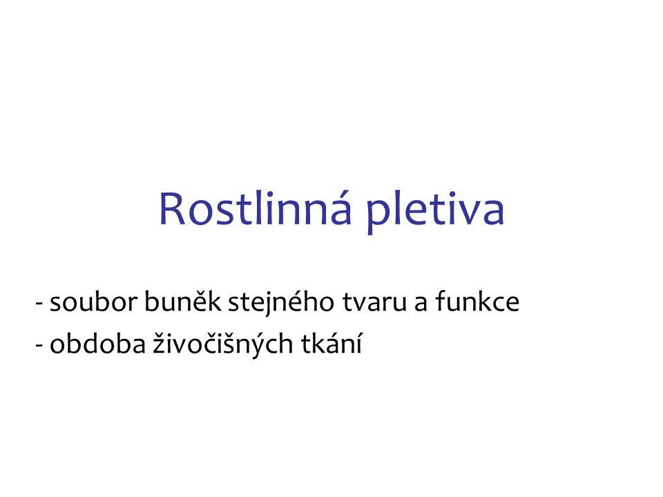 Zdroje: (k 26.12.2013) Obr.11: http://www.biologie.webz.cz/www/botanika/organologie.html Obr.