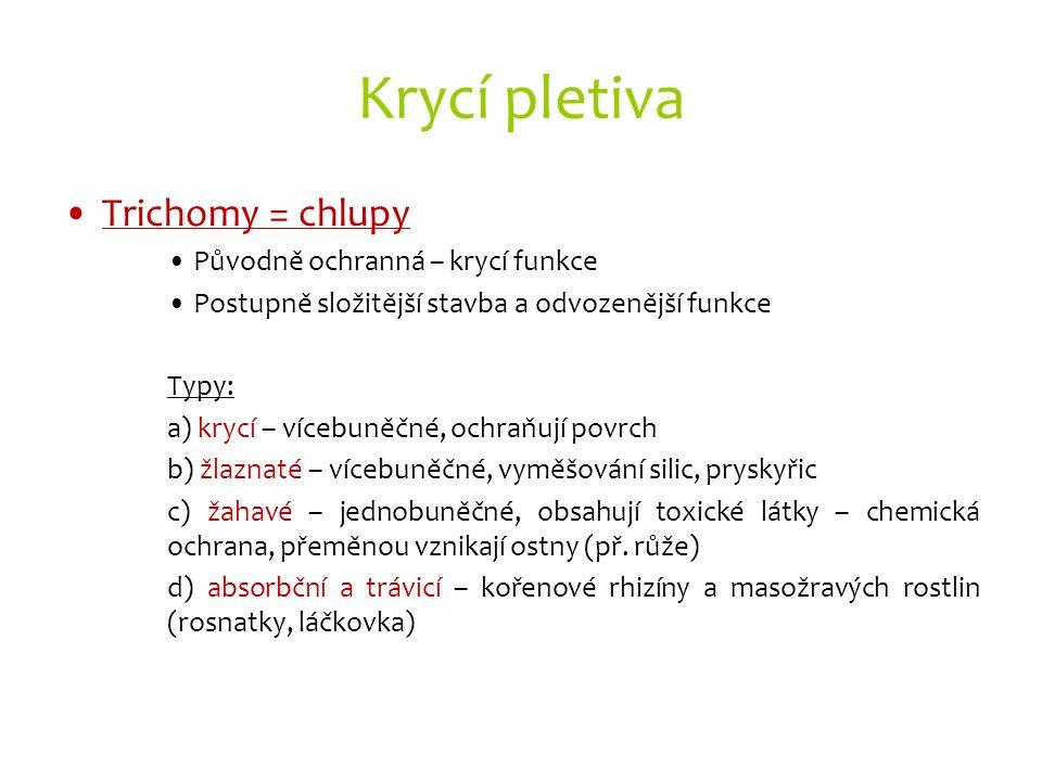 Krycí pletiva Trichomy = chlupy Původně ochranná – krycí funkce Postupně složitější stavba a odvozenější funkce Typy: a) krycí – vícebuněčné, ochraňuj