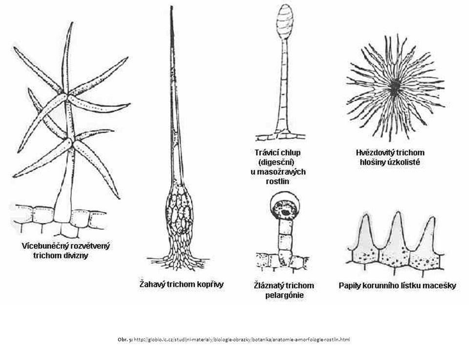 Základní pletiva Fce: různé – jde o skupinu různých pletiv –vzdušné pletivo – aerenchym – odlehčuje části rostlinných těl (listy, stonky i kořeny) –asimilační pletiva – jejich funkcí je začleňovat oxid uhličitý do glukózy při fotosyntéze – zelené části rostlin –vyměšovací pletiva – mají za úkol vylučovat do prostředí látky různého charakteru: medníky (nektaria) – produkují nektar – lákání opylovačů (zejména květy) mléčnice – produkují latex (mléko) – obranný mechanismus (opium, kaučukovníkový latex, pampeliška…) vodní skuliny umožňující gutaci (vylučování vody v kapalném stavu) idioblasty – buňky tvarem a velikostí odlišné od okolí – hromadí se v nich pryskyřice, silice či alkaloidy; mohou mít ale i zpevňující fci –zásobní pletiva – tvorba zásob živin či vody: nižší sacharidy nejčastěji v plodech, vyšší v hlízách lipidy v semenech bílkoviny (nemají takovou energetickou váhu jako u živočichů) Nejčastěji parenchym či sklerenchym.