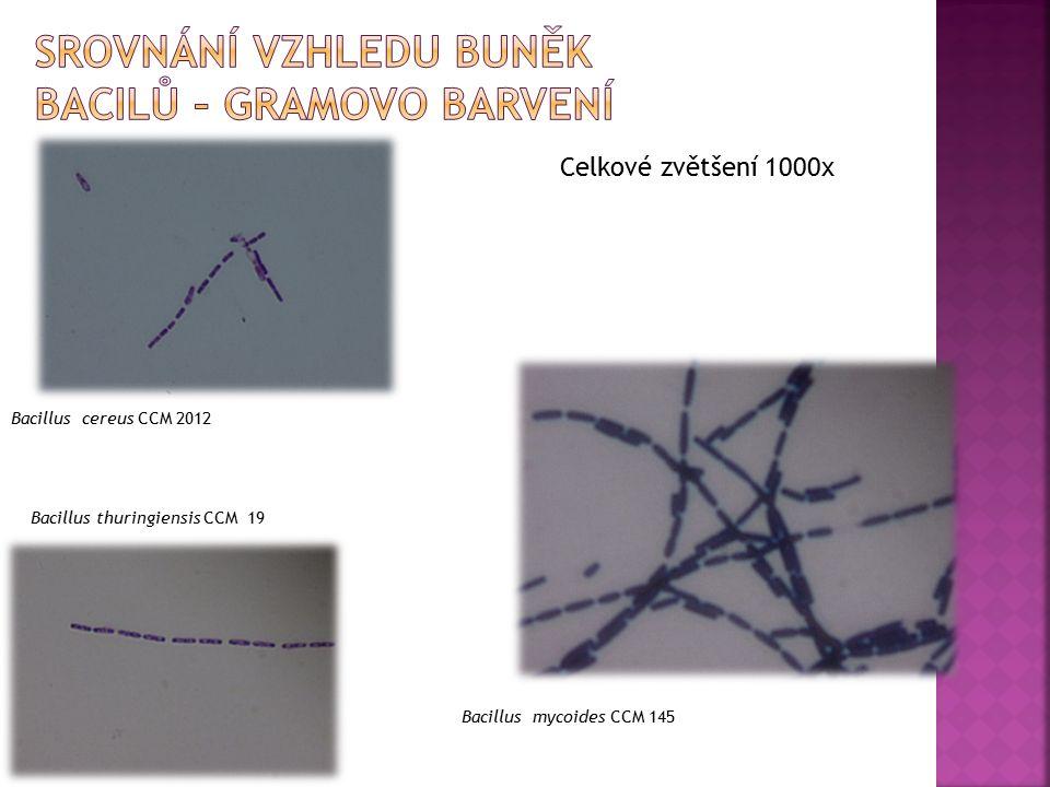 Bacillus cereus CCM 2012 Bacillus mycoides CCM 145 Bacillus thuringiensis CCM 19 Celkové zvětšení 1000x