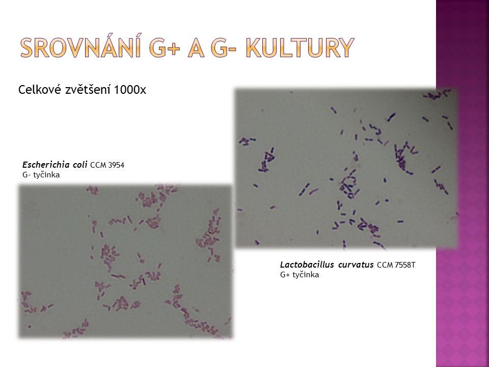 Celkové zvětšení 1000x Lactobacillus curvatus CCM 7558T G+ tyčinka Escherichia coli CCM 3954 G- tyčinka
