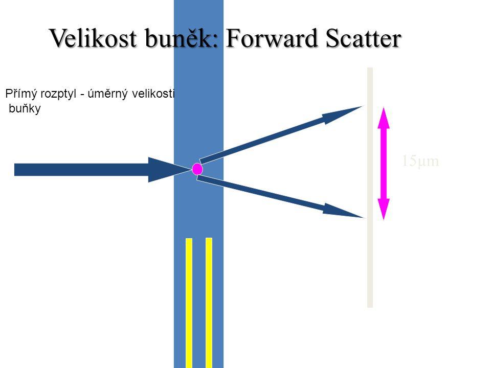 15µm Velikost buněk: Forward Scatter Přímý rozptyl - úměrný velikosti buňky