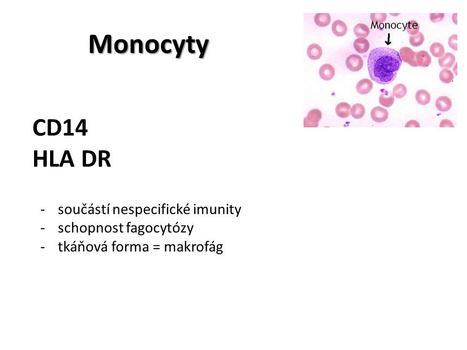 Monocyty CD14 HLA DR -součástí nespecifické imunity -schopnost fagocytózy -tkáňová forma = makrofág